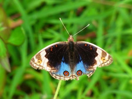 Butterfly in the grass field