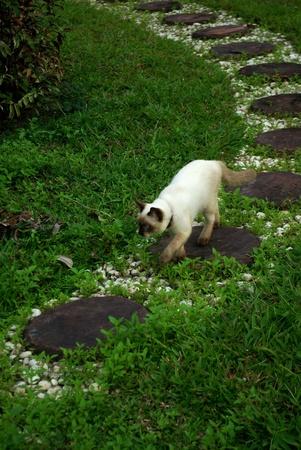 Cat is walking