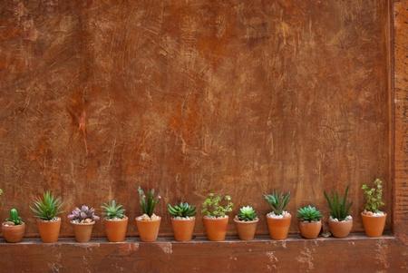 Cactus pot and wall
