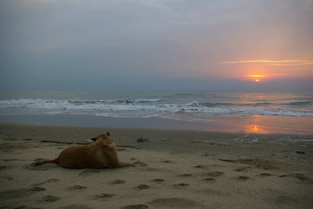 A Dog and sun raise