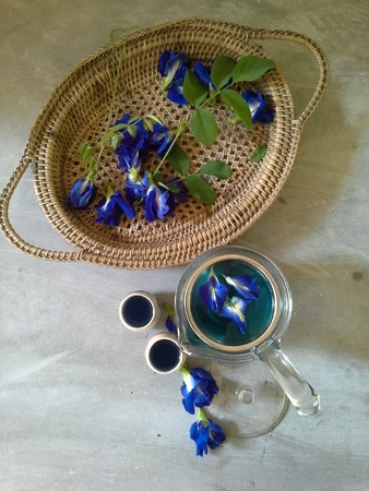 Violet butterfly pea flower in tea pot Stock Photo