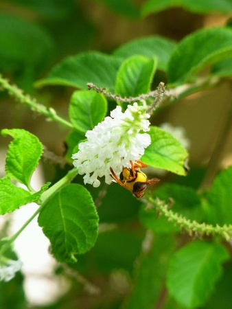 Wasp with flower