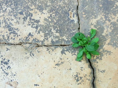 Small plant grow up from crack of cement floor