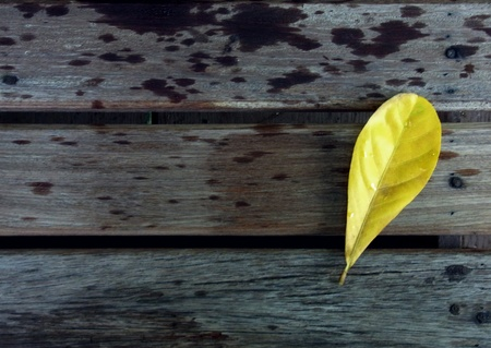 Leaf on the wooden floor