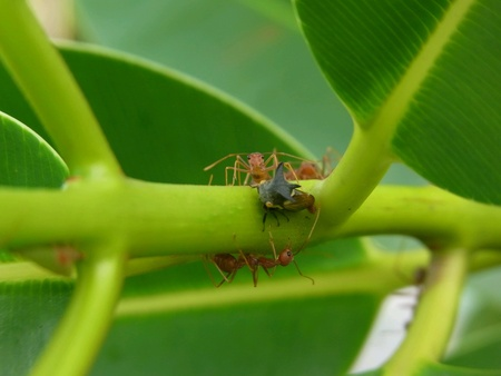 Ant eatting insect