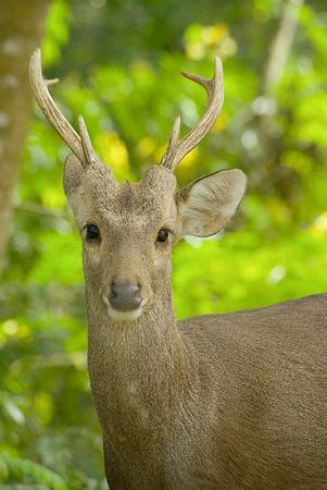 Wild deer Stock Photo