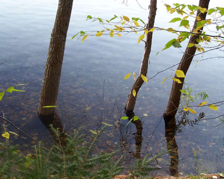 Tree trunks reflected in the water at Walden Pond Zdjęcie Seryjne
