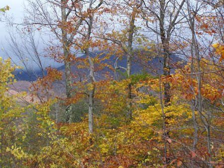 View of fall foliage with misty mountains in the background