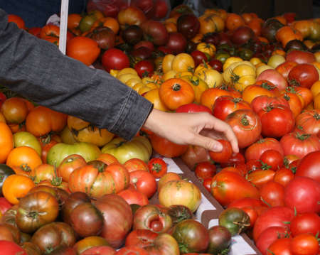 A shopper selecting tomatoes at an outdoor market Zdjęcie Seryjne