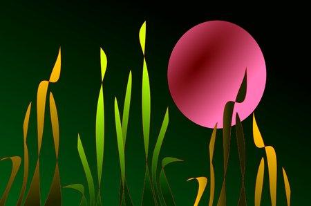 大きな月と草