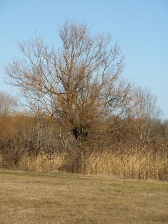 Oude boom Stockfoto