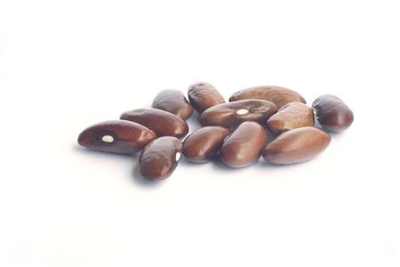 nutty: cutcute little brown beane little brown bean Stock Photo