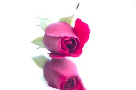 miror: rose on miror