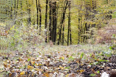 mt hood national forest: forest landscape