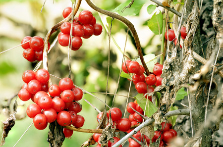 fruit Bray