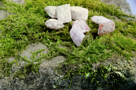 incense on green moss