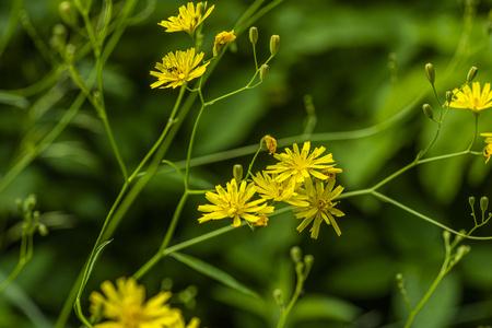 Flowers among the bush