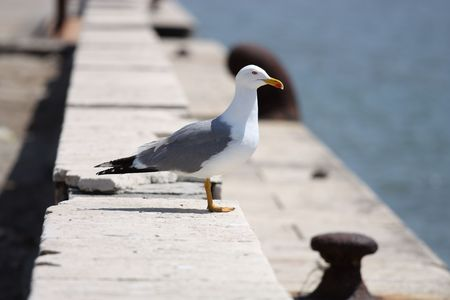 The Sea gull.Blanching sea gull costs on quay Stock Photo
