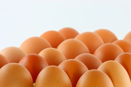 egg; object on a white background