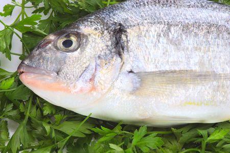 Pacific fresh fish background Stock Photo