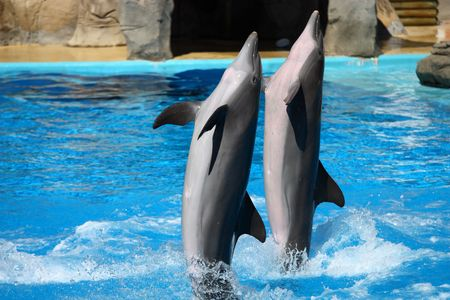 oceanography: happy dolphins jumping out of the water Stock Photo