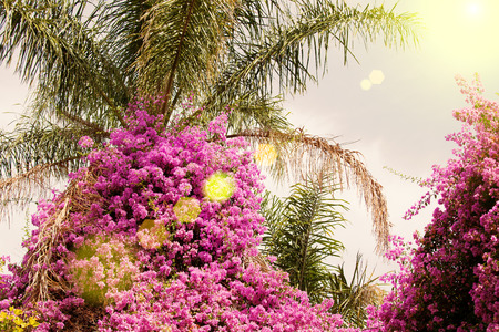Tree with pink flowers on the background of the sky Stock Photo