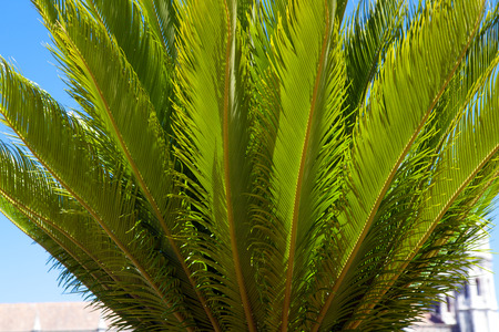 Decorative palm tree on blue sky background