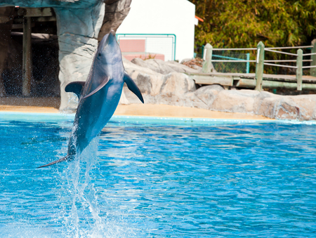 Bottlenose dolphin jumping high from bue water Stock Photo