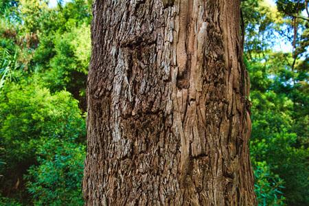 Closeup of the bark of an old tree Foto de archivo