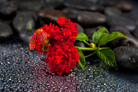 smooth: Spa stones with  flowers on dark background