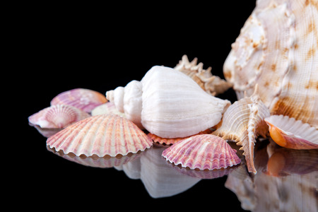 tropica: Bright colorful sea shells grouped across a dark background