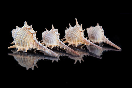 Some seashells isolated on black background, close up .
