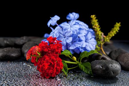 Nature morte avec des fleurs et des pierres noires