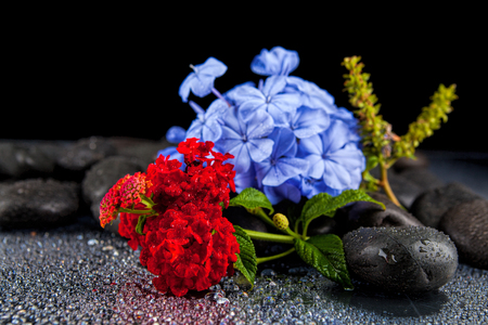 Still life with flowers and black stones