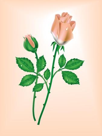 분홍색 배경에 두 장미