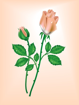 Two roses on a pink background Vector