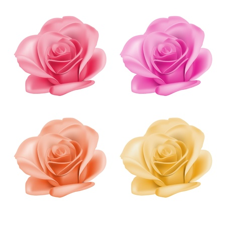 white flower: Set of roses in different colors, vector illustration Illustration