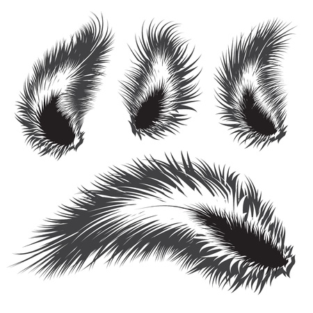 Set of vector feather silhouettes  Vector