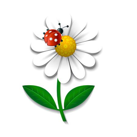 Camomile and ladybug isolated on white, design element