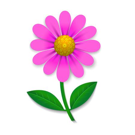 Pink Flower isoliert auf weißem