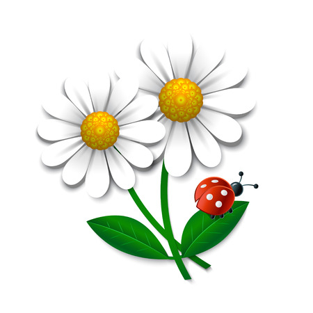 Vector flowers with ladybug, design element Illustration