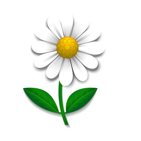 daisy vector: Vector daisy  isolated on white, design element Illustration