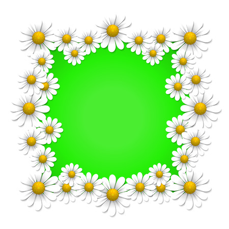 Floral background with camomile, vector illustration Illustration