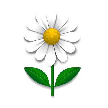 Camomile  isolated on white, design element, vector illustration
