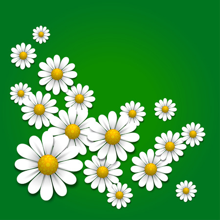 chamomile flower: Floral background with daisy, vector illustration