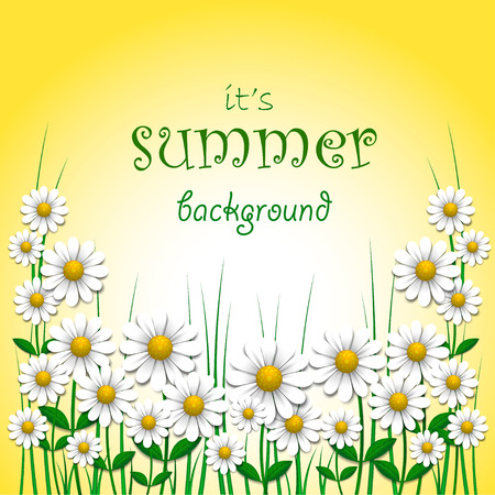 Summer background with camomile illustration