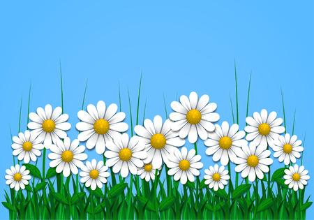 daisy vector: Summer background with daisy, vector illustration