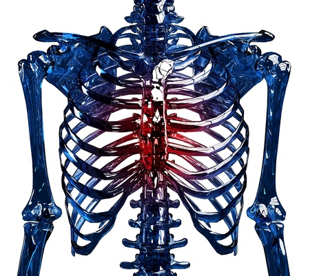 frontal view: Frontal view of a human skeleton chest and ribs made in 3D, showing thoracic pain concept. Isolated over white background.