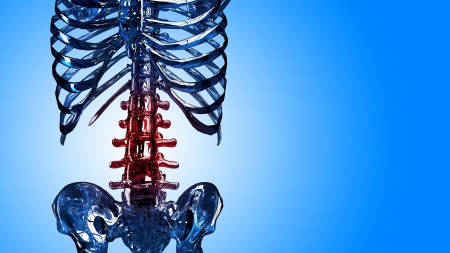 frontal view: Part of a human spinal column and thorax made in 3D in frontal view with painful red areas on chest over blue background.
