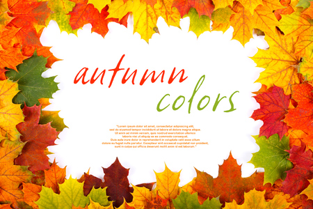 Fall maple leaf border with place for your text inside  Stock Photo